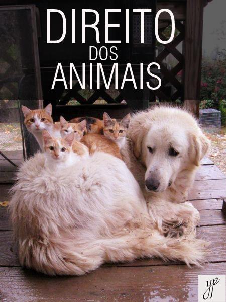 Artigo escrito por Advocacia Pescatori Galendi em defesa dos animais.